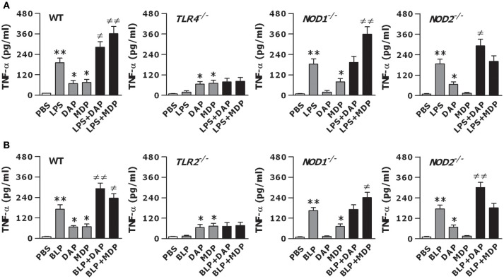 The augmented inflammatory response is dependent on the intact of both TLR and NOD signaling. Peritoneal macrophages and BMMs isolated from wild-type, TLR4- and TLR2-deficient, and NOD1- and NOD2-deficient mice were stimulated with LPS (10 ng/ml), Tri-DAP (5 μg/ml), MDP (5 μg/ml), and their combinations (A) or BLP (10 ng/ml), Tri-DAP (5 μg/ml), MDP (5 μg/ml), and their combinations (B) for 12 h. Macrophages incubated with PBS were used as the control. TNF-α concentrations in the supernatants were assessed by cytometric bead array. Data are expressed as mean ± SD from five to six independent experiments in duplicate. * p