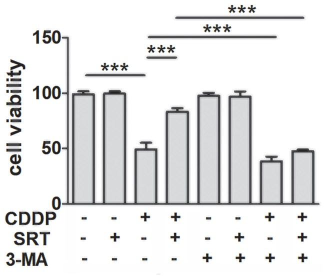SIRT1 protects against cisplatin-induced cell death via autophagy in HEI-OC1 cells. The CCK8 assay was performed to examine cell viability of HEI-OC1 cells in CDDP (20 μM) exposure for 24 h combined with 3-MA (5 mM) treatment with or without SRT1720 pre-treatment for 24 h (0.5 μM; n = 4 individual experiments). Data represent the mean ± SEM. *** p