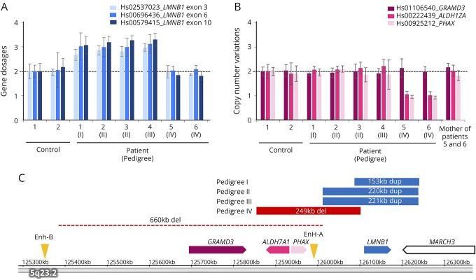 Analysis of CNVs of LMNB1 and its upstream region (A) Gene dosages for exons 3, 6, and 10 of LMNB1 were determined by TaqMan-based real-time PCR assay. The copy numbers of 3 exons of LMNB1 in patients 1–4 were increased by approximately 1.5-fold compared with control subjects, suggesting the presence of duplication of LMNB1 in these patients. (B) The copy number variations of regions upstream of LMNB1 including GRAMD3 , ALDH7A1 , and PHAX were determined by TaqMan-based real-time PCR assay. The copy numbers of ALDH7A1 and PHAX were decreased approximately by half in patients 5 and 6, suggesting the presence of the upstream deletion of LMNB 1. (C) The genomic regions of duplication (blue) and deletion (red) were analyzed using an Affymetrix CytoScan HD array and are shown on the basis of information obtained from the UCSC genome browser (assembly GRCh37/hg19). The regions of duplication were 153 kb in pedigree I, 220 kb in pedigree II, and 221 kb in pedigree III. The deletion upstream of LMNB1 in a previous report is shown by a dotted line. 8 The positions of original enhancer A (Enh-A) and alternative enhancer B (Enh-B) for LMNB1 are indicated by arrowheads. ALDH7A1 = aldehyde dehydrogenase 7 family member A1; CNV = copy number variation; GRAMD3 = GRAM domain containing 3; LMNB1 = lamin B1; PHAX = phosphorylated adaptor for RNA export.