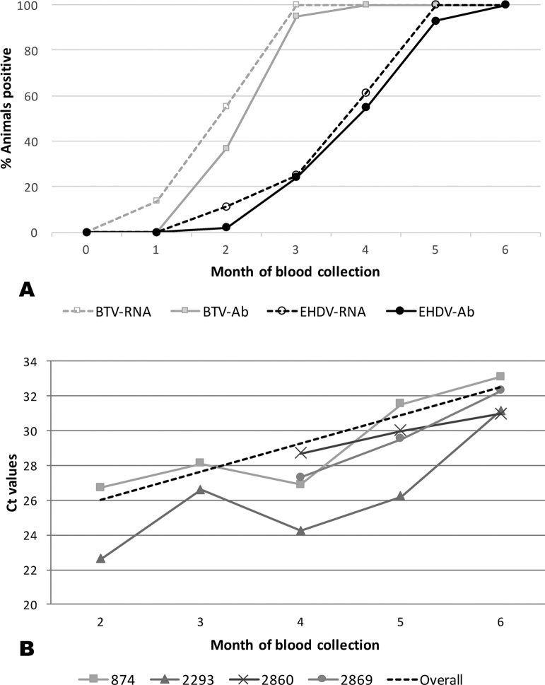 A: Percentage of cattle positive for antibodies (Ab) and RNA for both EHDV and BTV time of arrival in Trinidad (month 0) to the last month of blood collection (month 6).(BTV Ct values from their were taken from Brown-Joseph et al., 2017 ). B: Ct values measured by EHDV group-specific rRT-PCRs on blood samples taken from the first month of virus detection to the last month of blood collection (month 6). The dotted line shows the overall trending increase in Ct values for animal 874 during the five-month period.