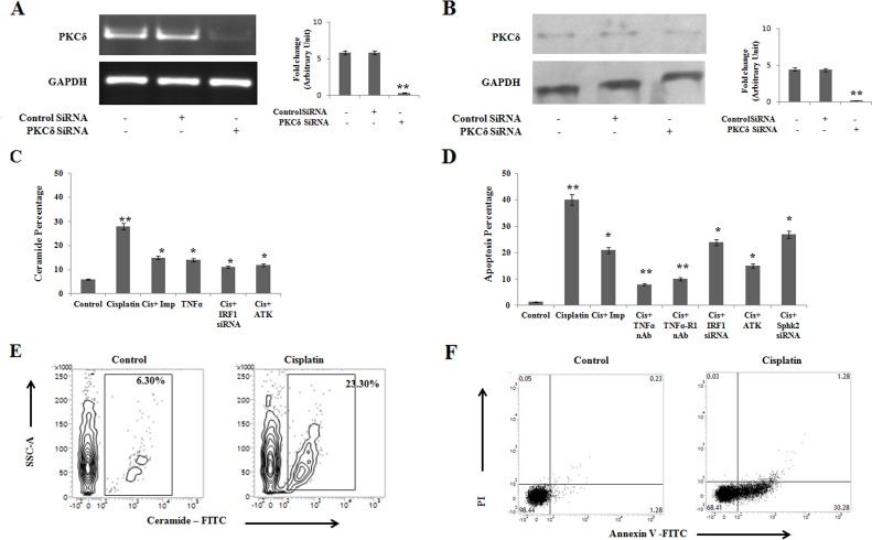 Cisplatin treatment in PKCδ silenced A375 human melanoma cells induces ceramide mediated <t>apoptosis</t> through IRF1-TNFα axis (A) 2 × 10 6 A375 cells were transfected with PKCδ specific siRNA or control siRNA as mentioned in Materials and Methods and the transfected cells were collected in TRIZOL for mRNA expression of PKCδ by semi quantitative RT-PCR. GAPDH was used as a reference. Data are from one of the three representative experiments. Bar diagram is represented as mean ± SD. * P