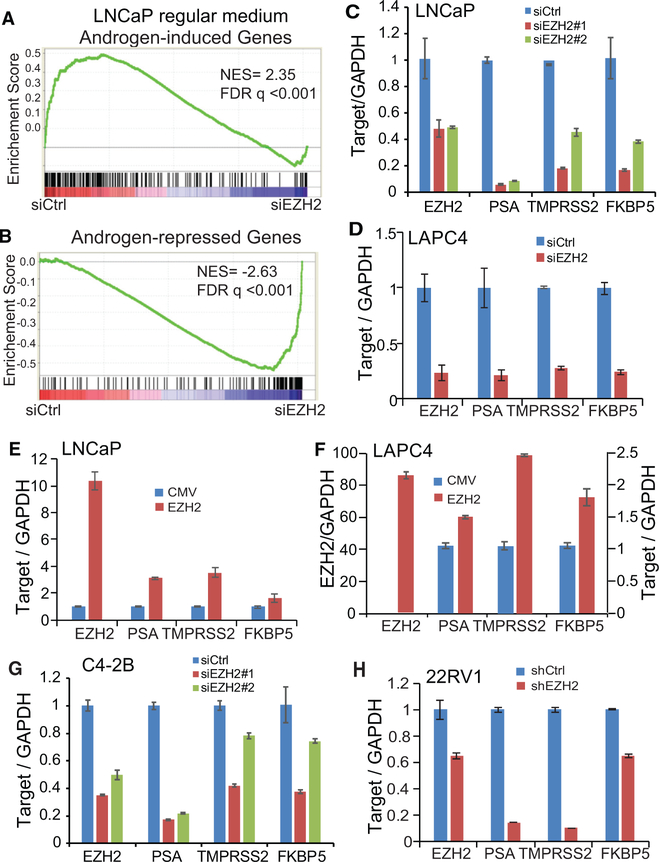 <t>EZH2</t> Enhances Androgen Signaling in Both ADPC and CRPC Cells (A and B) Androgen-induced genes (A) are enriched for downregulation upon EZH2 knockdown (false discovery rate [FDR] q