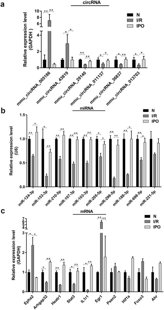 Validation of selected circRNAs, miRNAs and mRNAs by qRT-PCR. ( a ) 6 circRNAs were significantly amplified by qRT-PCR and consistent with the microarray results. (b) 9 miRNAs were significantly amplified by qRT-PCR and were inversely correlated with their corresponding circRNAs. (c) 6 mRNAs were significantly amplified by qRT-PCR while only Epha2, Arhgap32, Heatr1 and Egr1 had an identical expression trend with their corresponding circRNAs. * p