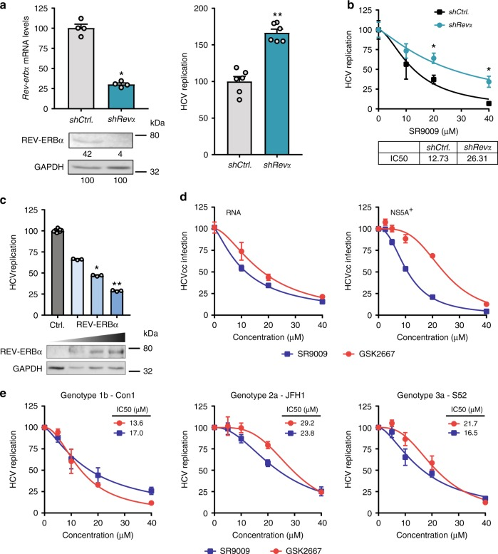 REV-ERBα inhibits hepatitis C virus (HCV) RNA replication. a Silencing Rev-erbα increases HCV replication. Huh-7 cells supporting a HCV JFH-1-LUC replicon were transduced with lentivirus encoding sh Rev-erbα or control and silencing confirmed by measuring Rev-erbα mRNA and protein expression levels (mean ± S.E.M., n = 4, Mann–Whitney test). Densitometric analysis quantified REV-ERB in individual samples and was normalised to its own GAPDH loading control. HCV replication-dependent reporter activity was measured and expressed relative to control (shCtrl) cells (mean ± S.E.M., n = 6, Mann–Whitney test). b Anti-viral activity of SR9009 agonist is dependent on REV-ERB expression levels. sh Rev-eRbα and Ctrl HCV JFH-1 replicon cells described in ( a ) were treated with REV-ERB agonist SR9009 for 24 h, viral replication measured and the concentration of agonist required to inhibit viral replication by 50% defined (IC 50 ) (mean ± S.E.M., n = 3). c REV-ERBα overexpression inhibits HCV RNA replication. Huh-7 cells stably supporting a HCV JFH-1-LUC replicon were transfected with empty plasmid or vector expressing REV-ERBα and 48 h later protein expression assessed by western blotting and viral replication measured (mean ± S.E.M., n = 4, Mann–Whitney statistical test). Data are plotted relative to Ctrl untreated cells. d REV-ERB agonists cure HCV-infected cells. HCVcc SA13/JFH-1 infected Huh-7 cells were treated with increasing concentrations of REV-ERB agonists for 24 h and viral RNA or NS5A-expressing cells quantified and data expressed relative to Ctrl untreated cells. The experiment was performed in the presence of a neutralising anti-CD81 antibody to limit secondary rounds of infection (mean ± S.E.M., n = 3). e REV-ERB ligands inhibit the replication of diverse HCV genotypes. Huh-7 cells transiently supporting HCV sub-genomic replicons representing genotypes 1–3 were treated with the REV-ERB agonists SR9009 or GSK2667 and replication assessed 24 h later. The dose of agon