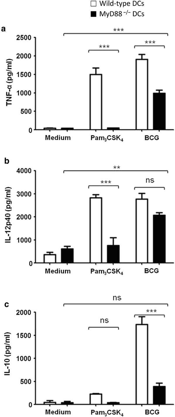 Cytokine secretion by MyD88 −/− dendritic cells (DCs) in response to BCG. Bone marrow-derived DCs from wild-type (open bars) and MyD88 −/− mice (filled bars) were stimulated with BCG at MOI of 10. Culture supernatants were harvested after 24 h and analyzed for TNF-α, IL-12p40. Significant levels of TNF-α and IL-12p40 were produced by BCG-stimulated wild-type and MyD88 −/− DCs, compared with unstimulated DCs ( a , b ). Culture supernatants were also analyzed for IL-10 levels. Significant amount of IL-10 was secreted by BCG-stimulated wild-type, but not by MyD88 −/− DCs ( c ). Synthetic TLR2 ligand Pam 3 CSK 4 (100 ng/ml) was used as an experimental control. Data shown are mean ± SEM of three independent experiments. **p