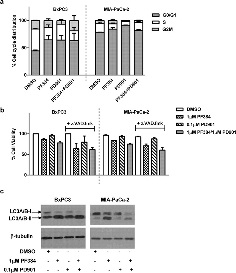 PF384 induces G1/G0 cell cycle arrest and decreases cell viability in a non-caspase dependent manner in association with the induction of autophagy. a) BxPC-3 and MIA-Pa-Ca-2 cells were treated as indicated for 24 hours after which they were labelled with propidium iodide and the percentage of cells in each stage of the cell cycle determined by flow cytometry. b ) Cells were treated as indicated for 6 hours after which cell viability was determined by MTT assay. Where z.VAD.fmk (100 μM) was used, cells were pre-incubated with this for 1 hour before the addition of other drugs. c) Cells were treated as indicated for 24 hours after which whole cell lysates were assessed for expression of LC3A/B and β-tubulin by western blotting. All data shown are the mean ± SEM for 3 independent experiments. Blots are representative of two biological repeats.