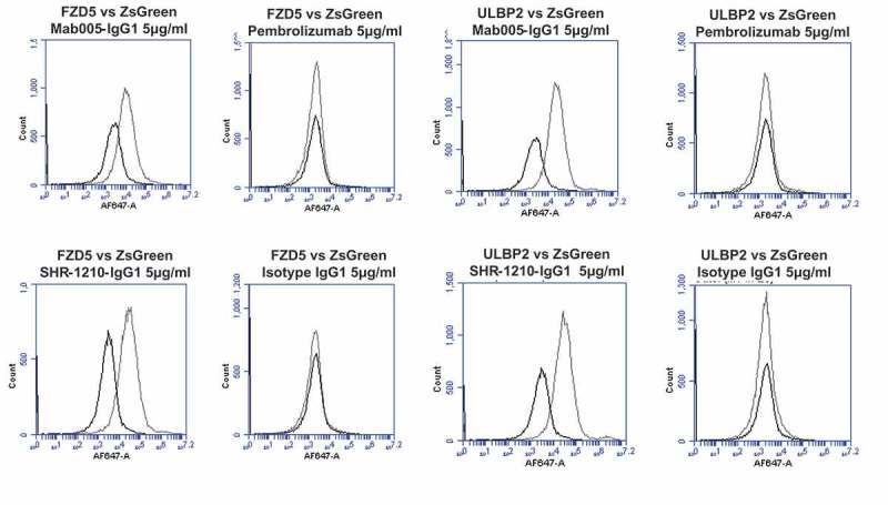 Specificity analyses by flow cytometry using transiently-transfected HEK-293 cells. Analyses of binding specificity were performed on HEK-293 cells transiently transfected with plasmids encoding either (A) human PD1, human VEGFR2, (B) human FZD5, human ULBP2. All plots show the target of interest transfected (grey line) versus ZS green marker-only transfected cells (black line). Transfected cells were stained using Mab005-IgG1, SHR-1210-IgG1, Pembrolizumab IgG1 null analog, and isotype IgG1. Each antibody was used in repeat staining at 5 μg/ml. These analyses confirmed that all antibodies (other than the isotype control IgG1) exhibited binding to PD1, but no antibody exhibited measurable signal on ZS-green transfected cells. Both Mab005-IgG1 and SHR-1210-IgG1 also exhibited strong binding to all targets, while the isotype IgG1 and Pembrolizumab analog did not.