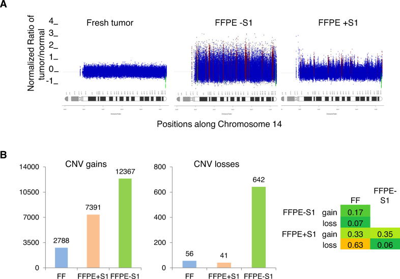 Effects of S1 nuclease treatment on FFPE-associated CNV noise. ( A ) Example illustrating CNV noise. Samples are the same as in Figure 5 . Using a bin size of 200 reads, CNV segments were calculated in the tumor samples relative to the normal blood sample and the resulting profile is shown for chromosome 14. ( B ) CNV counts at the gene level. Gains are shown on the left and losses are shown in the middle panel. Jaccard's intersection index (Materials and Methods) is shown in the right panel as a measure of overlap of gene-level CNVs between the three samples.