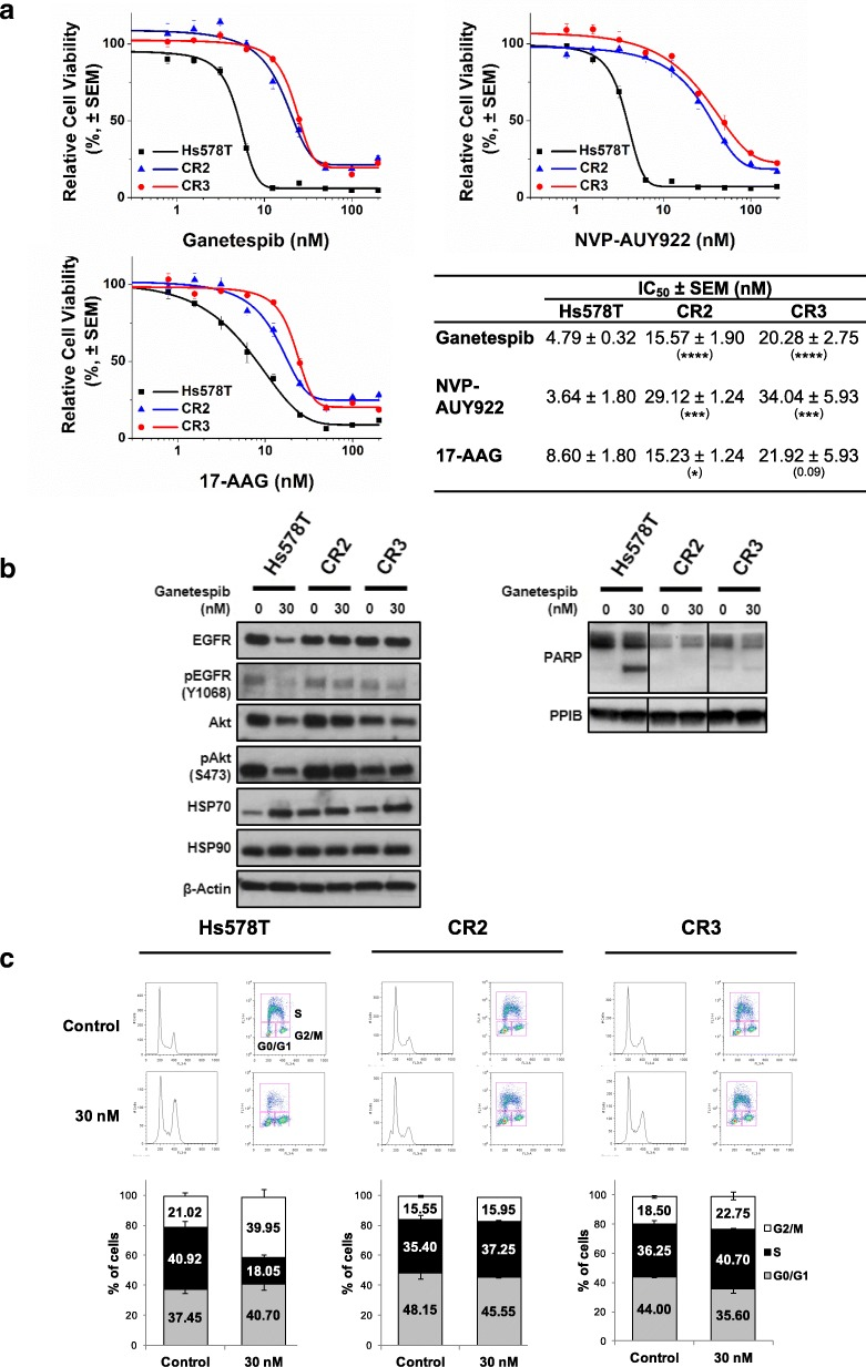 Resistance to HSP90i in CR2 and CR3. a Cross-resistance to HSP90i. Hs578T, CR2 and CR3 cells were treated with increasing concentrations of either ganetespib, NVP-AUY922 or 17-AAG for 72 h and subjected to resazurin-based cell viability assay. Cell viability (%) for each treatment was expressed relative to the DMSO-treated control. Representative graph from at least three independent experiments each performed in triplicate and error bars indicate SEM. The table represents the IC 50 values of compounds in the cell lines. The IC 50 values in respective clones were compared with the values in the parental Hs578T cells. *, *** and **** indicate p -value ≤0.05, ≤0.001 and ≤ 0.0001 respectively; by Student's t-test. b Absence of downregulated expression of HSP90 client protein and induction of apoptosis. Hs578T, CR2 and CR3 cells were treated with 30 nM ganetespib for 24 h. Lysates were subjected to western blotting analysis and blotted with indicated antibodies. Level of cleaved PARP was also determined to assess apoptosis. PPIB and β-actin were used as loading controls. Representative images from two experiments are shown. c G2/M cell cycle arrest observed in parental Hs578T cells only. Hs578T, CR2 and CR3 cells were treated with 30 nM ganetespib for 24 h and pulse labelled with BrdU for 20 min. Cells were stained with propidium iodide and anti-BrdU antibody before analysed by flow cytometry. The top images represent the cell population with BrdU staining and PI staining, which consist of G0/G1- (bottom left), G2/M- (bottom right) and S-phase. The graph represents the mean percentage of cells in each phase of cell cycle from two independent experiments. Error bars indicate SEM