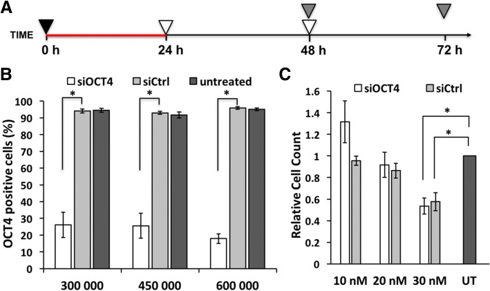 Cell viability and silencing efficiency depend on transfection conditions. a Scheme of the optimal gene silencing experiment: plating of cells (4.5 × 10 5 cells/well) and start of transfection at 0 h. Transfection complexes remained in the growth medium for 24 h until the medium exchange that was repeated at 48 h. At 48 h and 72 h time points, OCT4 level was analyzed by flow cytometry. Symbols: red line—transfection, black triangle—plating cells and adding transfection complexes, gray triangle—flow cytometric analysis, white triangle—medium exchange. b Flow cytometric analysis of OCT4 expression at 72 h in untreated cells or cells treated with 30 nM siOCT4 or siCtrl presented as percentage of OCT4-positive cells. X-axis represents the number of the cells plated into a well of 6-well plate. c Cell count normalized to untreated sample at 72 h time point while using optimal protocol. Abbreviations: UT, untreated. Statistical significance with P values less than 0.05 are labeled as * (mean ± SEM, N = 3)
