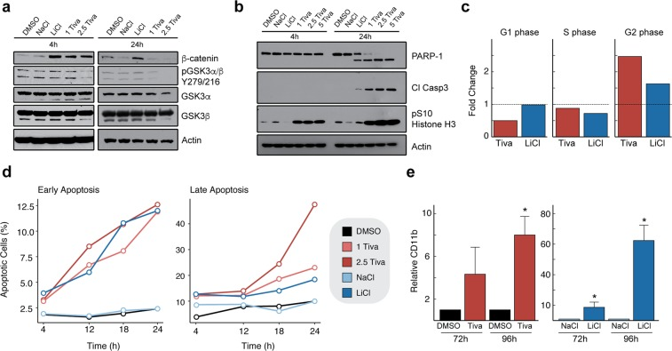 Analysis of cellular response following tivantinib treatment. ( a ) Effects of (-)-tivantinib (in μM), NaCl (20 mM) and the pan-GSK3 inhibitor LiCl (20 mM) on β-catenin and pGSK3α/β Y279/216 levels in HL60 cells. ( b ) Effects of tivantinib (in μM), NaCl (20 mM), and LiCl (20 mM) on PARP-1 and caspase 3 cleavage as well as pSer10 histone H3 levels after 4 and 24 h. ( c ) Cell cycle analysis by DAPI DNA staining following treatment of HL60 cells with DMSO, NaCl (20 mM), LiCl (20 mM), or tivantinib (1 μM) for 24 h. ( d ) Analysis of early and late apoptotic populations by Annexin V staining following treatment of HL60 cells for 4, 12, 18, or 24 h with DMSO, tivantinib (in μM), NaCl (20 mM), or LiCl (20 mM). ( e ) Cellular differentiation of HL60 cells following treatment with DMSO, tivantinib, NaCl or LiCl for 72 and 96 h as assessed by CD11b staining. Asterisk denotes p