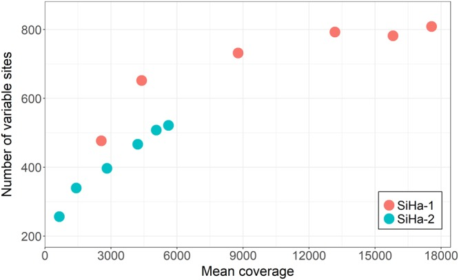 Number of variable sites in SiHa replicates. SiHa-1 (red dots) and SiHa-2 (blue dots) served as technical replicates to assess the variant calling performance. In SiHa libraries, sequenced on MiSeq and HiSeq 2500 platforms, increasing number of variable sites were detected with higher mean coverage.
