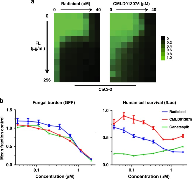 CMLD013075 reverses antifungal resistance in co-culture. a Checkerboard analysis of antifungal activity for combination of FL with Hsp90 inhibitors. FL-resistant strain CaCi-2 was exposed to the indicated twofold serial dilutions of each compound for 48 hours. Relative growth inhibition is displayed in heat-map format. Each colored box represents the mean of duplicate determinations. Color scale for relative growth is provided to the right of panel, green: no inhibition to black: complete inhibition. The experiment was repeated as an independent biological replicate to confirm results. b Co-culture of fluconazole (FL)-resistant, GFP-expressing C. albicans strain with human 293T cells line stably expressing a luciferase reporter. The concentration-dependent inhibition of fungal (left) and human (right) cell growth and survival by Hsp90 inhibitors in the presence of FL was measured in 384-well format after 48-h treatment. Relative fungal burden was evaluated by plate reader using a fluorescence endpoint while human cell survival was evaluated by measuring luminescence. Values for each endpoint were normalized to wells receiving no Hsp90 inhibitor. Each point represents the mean of measurements from triplicate wells. Error bars, SD. The experiment was repeated once as an independent biological replicate to confirm results
