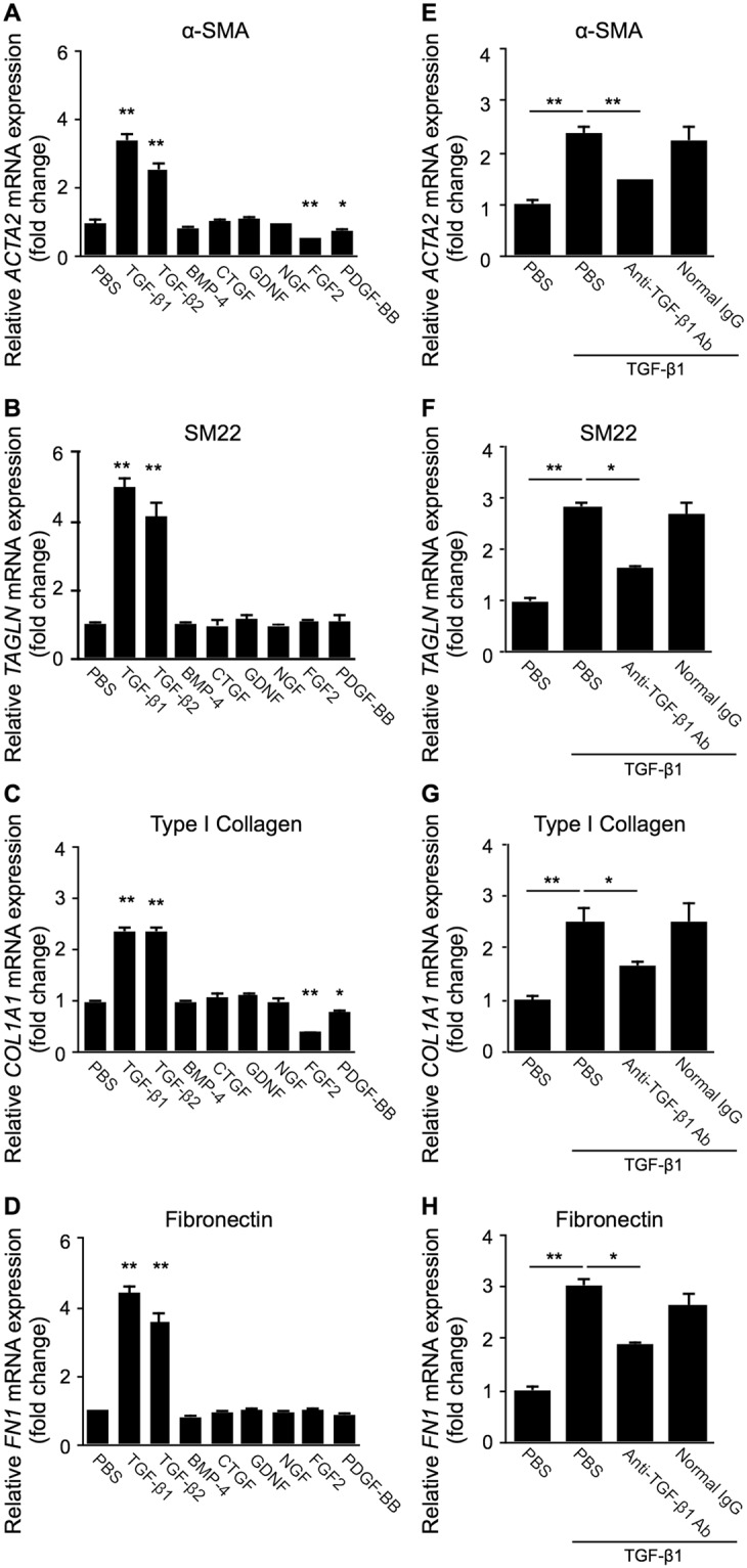 <t>TGF-β1</t> and TGF-β2, but not other pro-fibrotic cytokines, exclusively induces the expression of EMT markers in Müller glial cells. ( A–D ) Müller glial cells were treated with TGF-β1, TGF-β2, BMP-4, CTGF, GDNF, NGF, FGF2, and PDGF-BB at the dose of 10 ng/ml for 24 hours, and ACTA2 ( A ), TAGLN ( B ), COL1A1 ( C ), and FN1 ( D ) expression levels were analyzed. E-H , Müller glial cells were treated for 24 hours with the reaction mixture of 10 ng/ml TGF-β1 preincubated with anti-TGF-β1 neutralizing antibody or control normal <t>IgG</t> at the dose of 200 ng/ml for 15 minutes, and ACTA2 ( E ), TAGLN ( F ), COL1A1 ( G ), and FN1 ( H ) gene expression levels were analyzed. n = 5–6 per group, * p