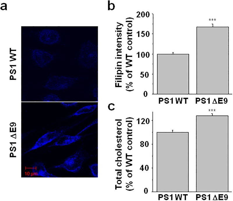 Cholesterol level was higher in the CHO PS1 ΔE9 cells than in the PS1 WT cells. ( a ) Free cholesterol was visualized by filipin staining from the CHO PS1 WT and ΔE9 cells. ( b ) Fluorescence intensities were compared between the PS1 WT (n = 11) and ΔE9 cells (n = 13). ( c ) Total cholesterol levels were measured from cell membrane fractions using the Amplex Red cholesterol assay kit from the PS1 WT and ΔE9 cells (n = 7). Statistical analysis was carried out using one way ANOVA: ***p