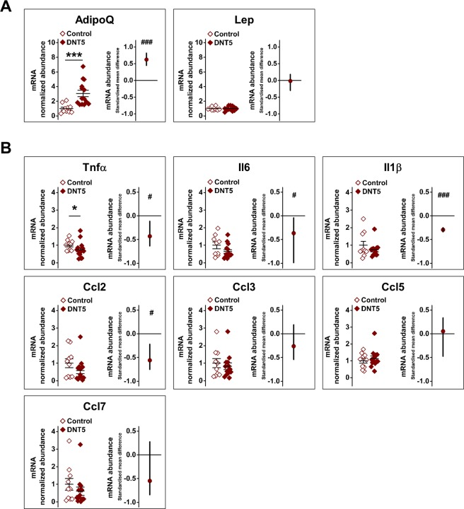 Increased adiponectin and reduced inflammatory gene expression in adipose tissue of DNT5 mice. All data were from quantitative real-time PCR analysis of epididymal fat pad RNA after mice had been provided with western-style diet and DOX for 12 weeks. All mice were ApoE −/− . ( A ) Comparison of adiponectin (AdipoQ) and leptin (Lep) mRNA abundance between Controls and DNT5. On the left, Mann-Whitney analysis showing mean and s.e.m (N = 10 Control, N = 14 DNT5). On the right, linear random effects model analysis showing the standardised mean difference and confidence intervals (n/N = 8/10 Control, n/N = 8/14 DNT5). Data above the zero line indicate increase in the DNT5 group. ( B ) Comparison of the inflammatory mediators tumour necrosis factor α (Tnfα), interleukin 6 (Il6), interleukin 1β (Il1β) and C-C motif chemokine ligands 2, 3, 5 and 7 (Ccl2, 3, 5 and 7) mRNA abundance between Controls and DNT5. On the left, Mann-Whitney analysis showing mean and s.e.m (N = 10 Control, N = 14 DNT5). On the right, linear random effects model analysis showing the standardised mean difference and confidence intervals. Data below the zero line indicate decrease in the DNT5 group (n/N = 8/10 Control, n/N = 8/14 DNT5).