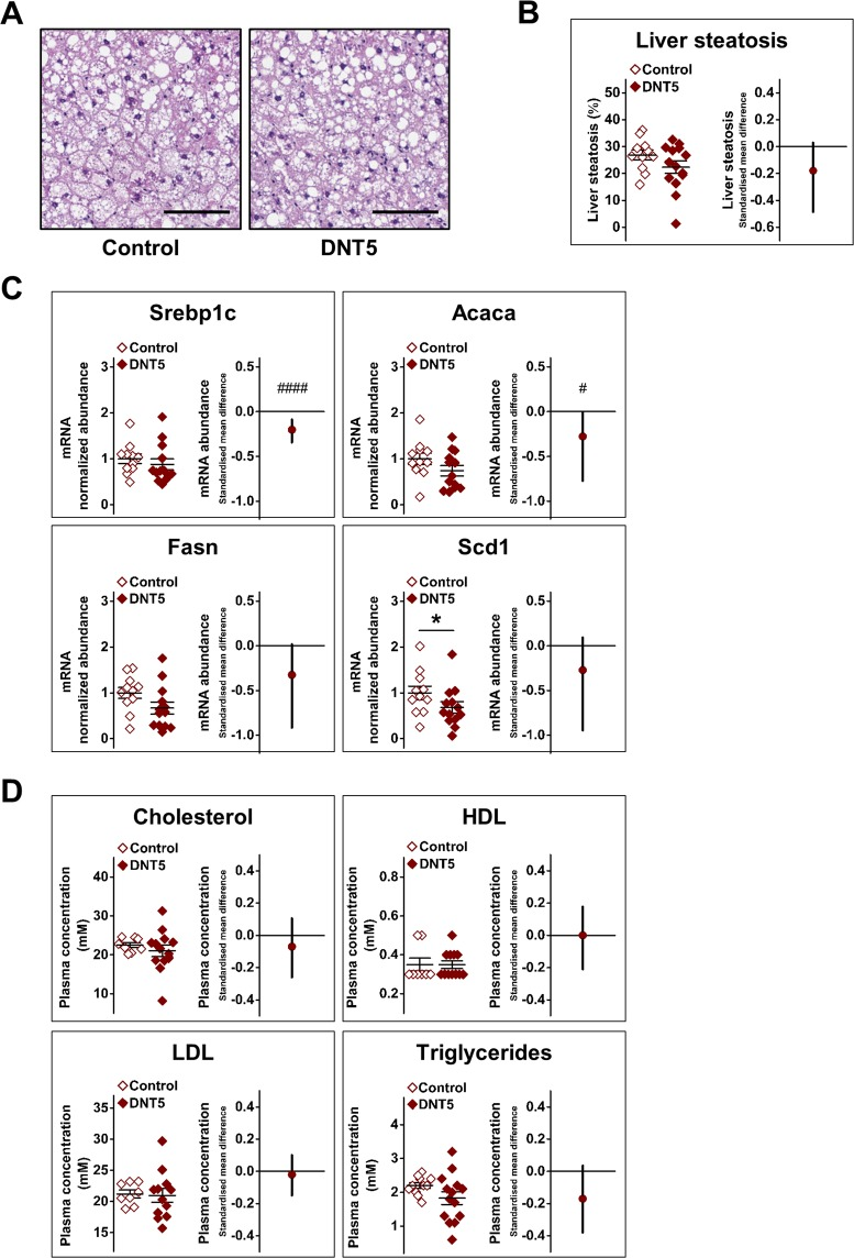 Reduced hepatic gene expression for lipogenesis mediators in DNT5 mice. All data were from mice which had been provided with western-style diet and DOX for 12 weeks. All mice were ApoE −/− . ( A ) Example liver sections stained with H E. Scale bar 100 μm. ( B ) Comparison of lipid content (steatosis) between Controls and DNT5. On the left, Mann-Whitney analysis showing mean and s.e.m (N = 11 Control, N = 14 DNT5). On the right, linear random effects model showing the standardised mean difference and confidence intervals. Data below the zero line indicate decrease in the DNT5 group (n/N = 8/11 Control, n/N = 8/13 DNT5). ( C ) All data were from quantitative real-time PCR analysis of liver RNA. Comparison of expression of sterol regulatory element-binding protein 1c gene (Srebp1c), acetyl-CoA carboxylase 1 gene (Acaca), fatty acid synthase gene (Fasn) and stearoyl-CoA desaturase 1 gene (Scd1) mRNA abundance between Controls and DNT5. On the left, Mann-Whitney analysis showing mean and s.e.m (N = 11 Control, N = 14 DNT5). On the right linear random effects model showing the standardised mean difference and confidence intervals. Data below the zero line indicate decrease in the DNT5 group (n/N = 8/11 Control, n/N = 8/13 DNT5). ( D ) Comparison of non-fasting plasma concentrations of cholesterol, high-density lipoprotein (HDL), low-density lipoprotein (LDL) and triglycerides between Controls and DNT5 after 12 weeks of western-style diet and DOX administration. On the left, Mann-Whitney analysis showing mean and s.e.m (N = 11 Control, N = 14 DNT5). On the right, linear random effects model showing the standardised mean difference and confidence intervals (n/N = 8/11 Control, n/N = 8/14 DNT5).