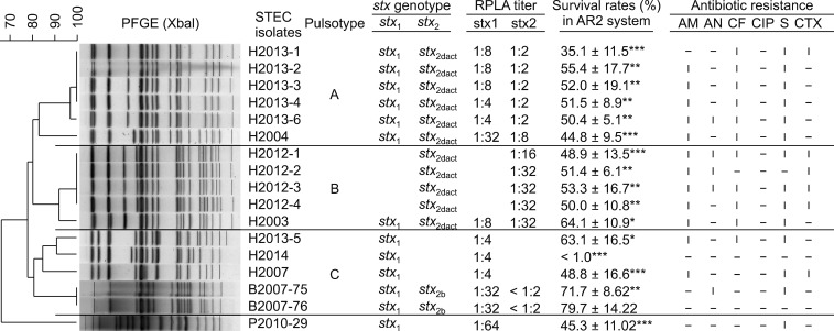 Pulsed-field gel electrophoresis (PFGE) profiles and virulence characteristics of the 17 Shiga toxin-producing Escherichia coli (STEC) O91:H14 isolates with sequence type 33. The data, including multilocus sequence types, stx genotypes, reverse passive latex agglutination (RPLA) titers of Shiga toxins (Stxs), glutamate-induced acid resistance, and antibiotic resistance phenotypes, were combined and presented with the pulsotypes. The STEC isolates were divided into three pulsotypes (A to C) based on > 80% similarity of PFGE profiles. The RPLA titers of Stxs and the acid survival rates (AR2) were quantitated and compared with those of EDL933, which produced both Stx 1 and Stx 2 (1:16 and ≥ 1:128 RPLA titers, respectively) as well as surviving well in EG media (pH 2.5) with 1.5 mM glutamate. AM, ampicillin; AN, amikacin; CF, cephalothin; CIP, ciprofloxacin; S, streptomycin; CTX, <t>cefotaxime;</t> I, intermediate resistance. * p