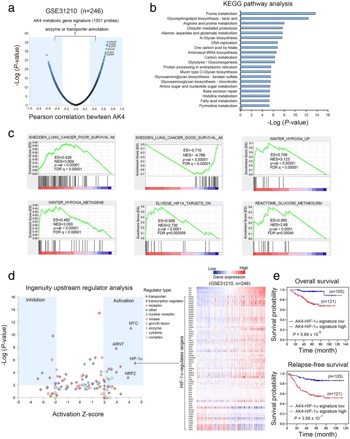 Upstream analysis of the AK4 metabolic gene signature predicted that HIF-1α is transcriptionally activated in lung adenocarcinomas. a Genes were ranked according to their corresponding Pearson correlation coefficient ( R ) to AK4 expression. Genes that are positively correlated with AK4 ( R ≥ 0.3) or negatively correlated with AK4 ( R ≤ − 0.3) were further filtered with enzyme or transporter annotations and defined as the AK4 metabolic gene signature. b KEGG pathway analysis of the AK4 metabolic gene signature. Bar chart represents top 20 significant metabolic pathways ranked according to – log enrichment P value. P values were calculated using Fisher exact test. c GSEA plots of lung cancer prognostic, hypoxic response, and glucose metabolism genes in the AK4 metabolic gene signature. d Left, the ingenuity upstream regulator analysis algorithm predicted significant activation or inhibition of upstream regulators in the AK4 metabolic gene signature. An activation z score of more than 2 or less than − 2 was considered to indicate significant activation or inhibition, respectively. Right, a heatmap illustrating both direct and indirect HIF-1α-regulated genes that are positively or negatively correlated with AK4 expression. e Left, overall survival analysis of patients stratified according to the AK4-HIF-1α gene expression signature. Right, relapse-free survival analysis of patients stratified according to the AK4-HIF-1α gene expression signature