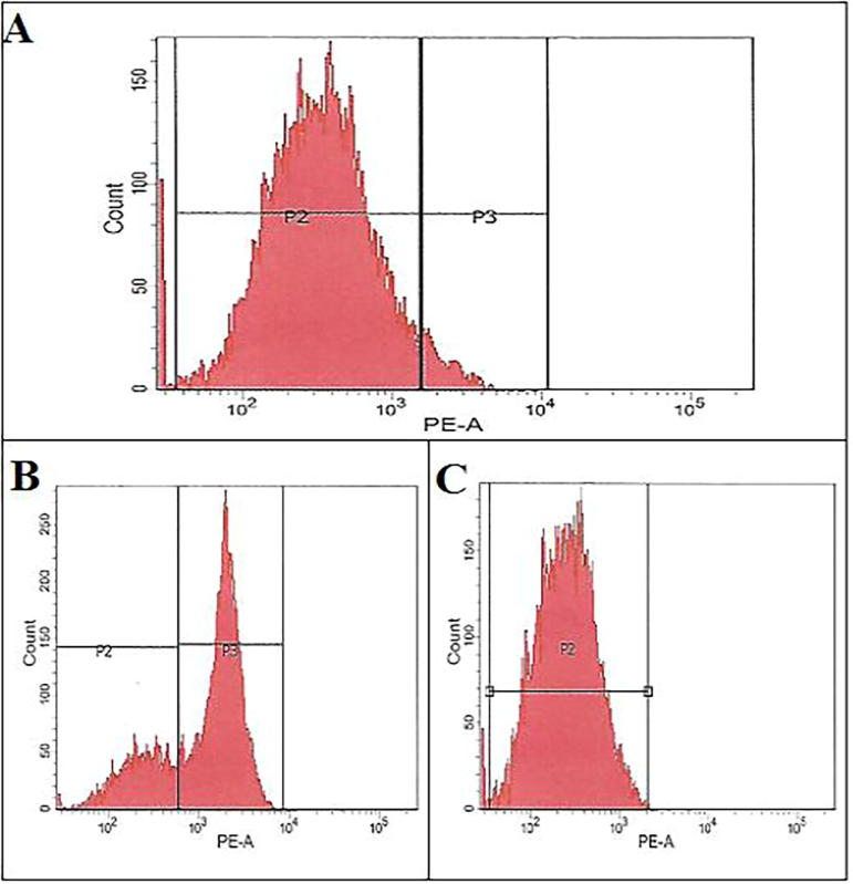 Verification of Muse cells after FACSAria III separation. A. Percentage of Muse cells among MSCs. B. Percentage of Muse cells within the positive fraction. C. Percentage of non-Muse cells within the negative fraction.