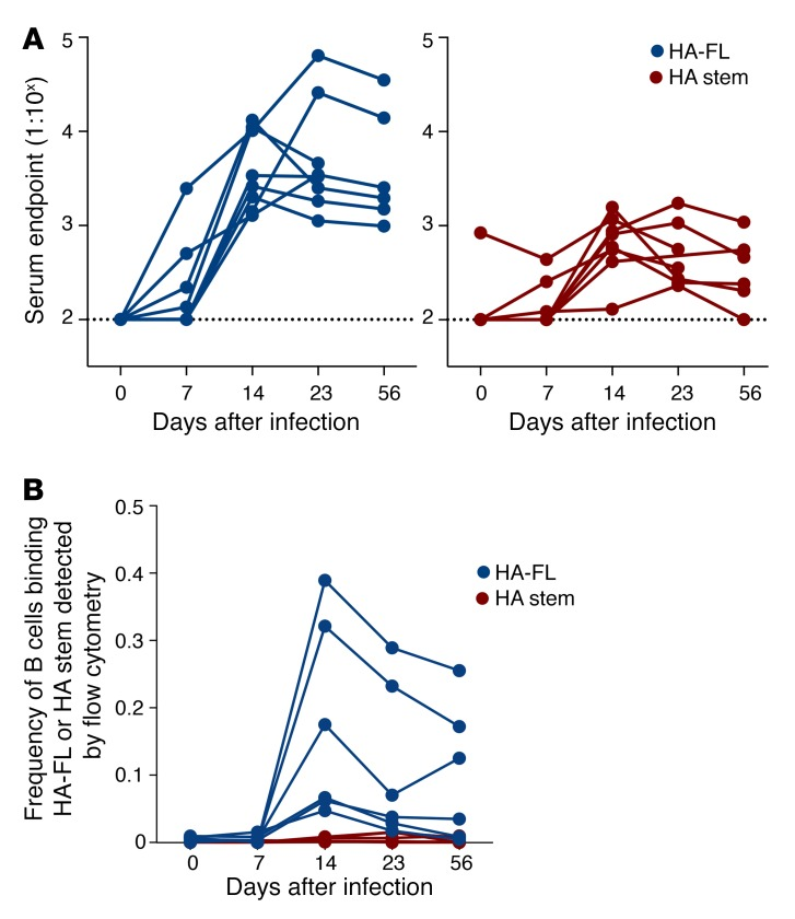 Serological and B cell responses in experimentally infected macaques. ( A ) Serum endpoint total IgG titers were measured by ELISA using CA09 HA-FL (blue) or stabilized CA09 HA stem (red) in macaques ( n = 8) infected intranasally with A/Auckland/1/2009. Note that 2 animals were sacrificed on day 23. Dotted lines denote the detection cutoff (dilution 1:100). ( B ) Frequency of IgG + memory B cells (CD19 + IgD – IgG + ) binding CA09 HA-FL (blue) or stabilized CA09 HA stem (red) was measured by flow cytometry within cryopreserved PBMC samples from infected macaques ( n = 6). Note that the 2 animals sacrificed on day 23 were excluded.