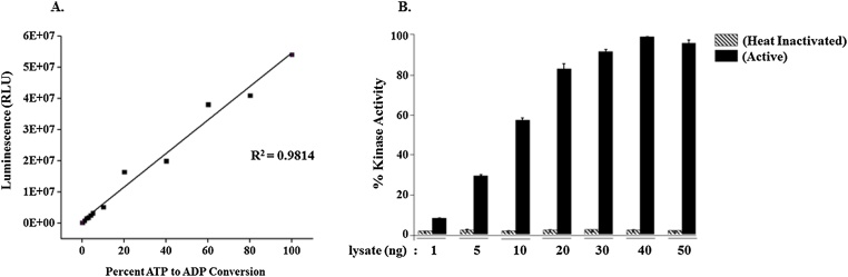 """Evaluation of ADP-Glo™ kinase assay linearity and implementation of the assay for parasite lysate . Panel A . ATP to ADP conversion curves were prepared at the indicated """"ATP + ADP"""" concentration in 20 μl of 1× reaction buffer. Kinase assay was performed as described in methods section. There is a linear relationship observed between the luminescent signal and amount of ADP present in the reaction mix. Panel B . ADP-Glo™ Kinase Assay was utilized to detect functional activity of kinases in the parasite lysate. Reactions were setup by taking varying amounts of the lysate in a total volume of 20 μl per reaction, as described in methods section. Kinase reactions were initiated by adding 1 μM ATP and allowed to take place at 30 °C for 1 h, followed by ADP-Glo™ kinase assay. The luminescence signal thus produced increases with the amount of lysate in a kinase reaction. Luminescence values represent the mean of two replicates. Abbreviation: RLU, Relative Lights Unit."""