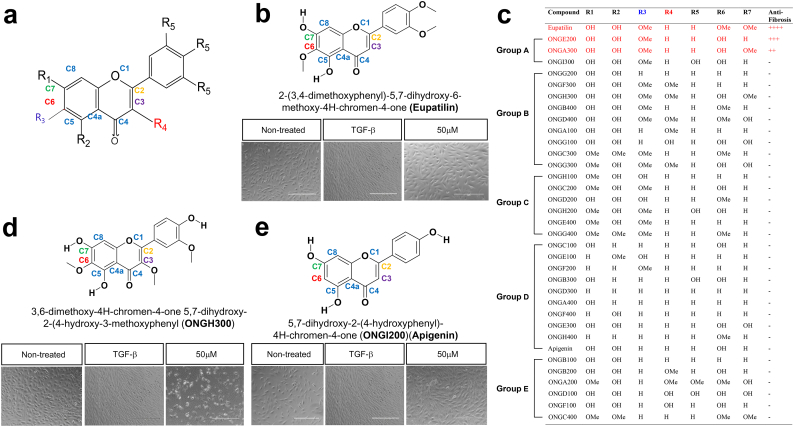 Structure–activity relationship of a selected group of chromone derivatives. (a) Chemical structure of the general chromone scaffold, with its carbons denoted in colored fonts. C2, C3, C6, and C7 are critical for anti-fibrogenesis. (b) ONGHEPA1 cells were simultaneously stimulated with control medium, TGF-β, or TGF-β plus eupatilin (50 μM). Anti-fibrogenic effects were observed by phase-contrast light microscopy. (c) A list of 35 CDs, grouped by chemical moieties coupled to the chromone scaffolds or the phenyl ring. Group A, including eupatilin, ONGA300 (jaceosidin), and ONGH300 (hispidulin), exerted potent anti-fibrogenic capacity. (d) Anti-fibrogenic effects of ONGH300, observed by phase-contrast light microscopy. (e) Anti-fibrogenic effects of ONGI200 (also called apigenin), observed by phase-contrast light microscopy.