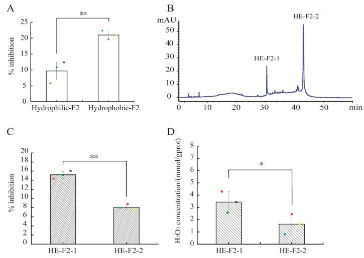 "Purification of active fraction F2 using reverse phase high performance liquid chromatography (RP-HPLC) and the activities of sub-fractions assay: ( A ) percentage inhibition of hydrophilic and hydrophobic extracts of F2; ( B ) chromatogram of active fraction F2 by RP-HPLC, measured at 280 nm; ( C ) percentage inhibition of F2-1 and F2-2; and (D) H 2 O 2 production capacity of F2-1 and F2-2. Spots in ( A , C , D ) represent the raw data. The results are expressed as the mean ± standard deviation ( n = 3). The symbol of ""**"" and ""*"" in ( A , C , D ) represent significant differences of p"