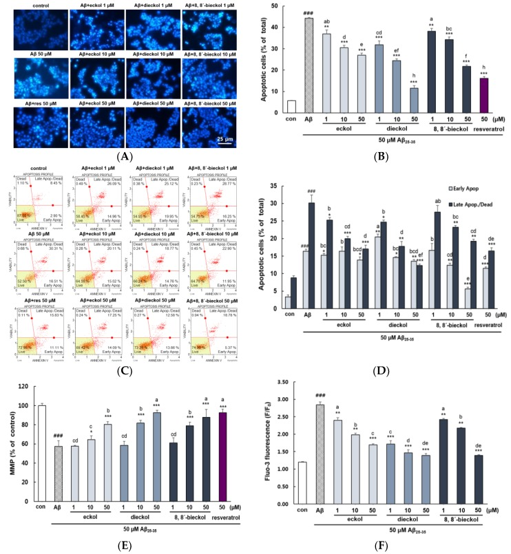 Protective effects of eckol, dieckol and 8,8′-bieckol on Aβ 25-35 -indued <t>apoptosis</t> in PC12 cells. ( A ) Morphological apoptosis determined by fluorescence microscopy (400×). ( B ) The percentage of apoptotic cells of the total number of cells. ( C , D ) Early and late apoptosis detected by flow cytometry using Annexin V/7-AAD staining. The lower left area means normal cells (annexin V−/7-AAD−), lower right area means early apoptotic cells (annexin V+/7-AAD−), upper right area means late apopotic and dead cells (annexin V+/7-AAD+) and upper left area means dead cells (annexin V−/7-AAD+). ( E ) Analysis of MMP examined by rhodamine 123. ( F ) The intracellular Ca 2+ levels analyzed using fluo-3AM. ### p