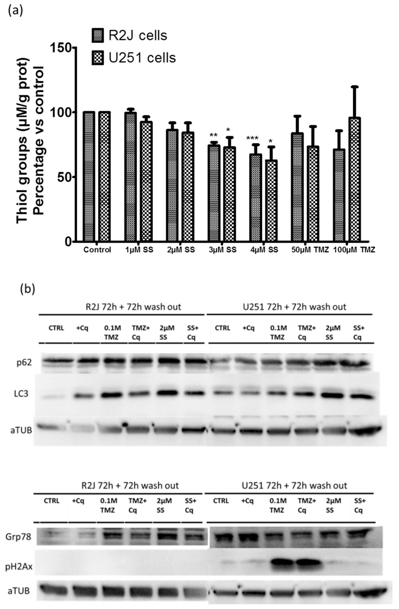 SS's potential way of action was studied by evaluating ( a ) oxidative stress by thiol group levels in R2J and U251 cell lines after being treated for 24h with SS or TMZ. Cell lysates were obtained after five thaw-freeze cycles. Thiol groups (µM) were normalized by the protein concentration in each sample. Results, expressed in percentage vs. control (not treated cells), are the mean ± SD of three independent experiments with * p