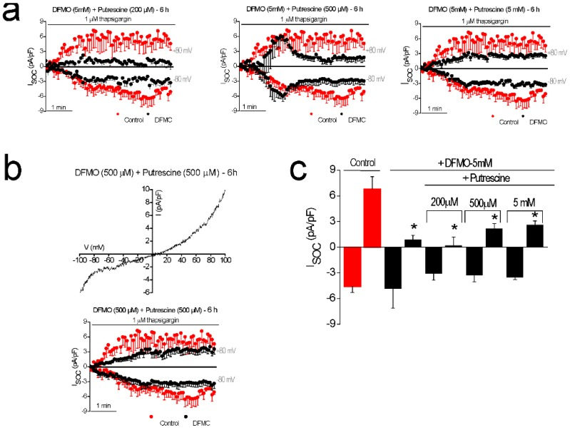 Putrescine reverses the effects of DFMO treatment on I SOC in colon cancer HT29 cells. I SOC were activated with 1 µM thapsigargin in HT29 cells with intracellular medium containing strong Ca 2+ buffer (20 mM EGTA). ( a ) Averaged time course of I SOC obtained from HT29 cells, at −80 mV and 80 mV, for control untreated cells (red circles) and cells exposed for 6 h to 5 mM DFMO plus 200 µM, 500 µM, and 5 mM putrescine, respectively (black circles, mean ± SEM, n = 10–12). ( b ) Representative I–V relationship and time course of I SOC in HT29 cells treated for 6 h with 500 µM DFMO plus 500 µM putrescine (mean ± SEM, n = 10). ( c ) Bar graphs are averages of I SOC measured after 5 min of stimulation with 1 µM thapsigargin for control cells and cells exposed to DFMO plus putrescine at different concentrations (mean ± SEM of 10 to 12 separate experiments, * p