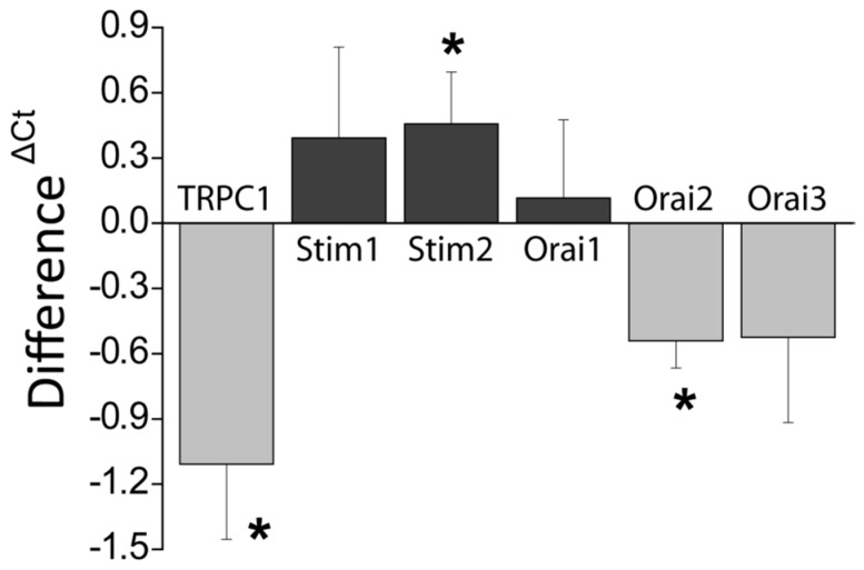 Effects of DFMO on the expression of genes coding for SOCE molecular players in HT29 cells. mRNA expression levels of selected genes were determined using qRT-PCR of extracts from control and DFMO-treated HT29 cells. β-actin was used as a reference. Data results are mean ± SEM from DFMO-treated cells relative to untreated cells Data are from n = 7, 7, 6, 6, 6, and 5 experiments for TRPC1 , STIM1 , STIM2 , ORAI1 , ORAI2 , and ORAI3 , respectively * p