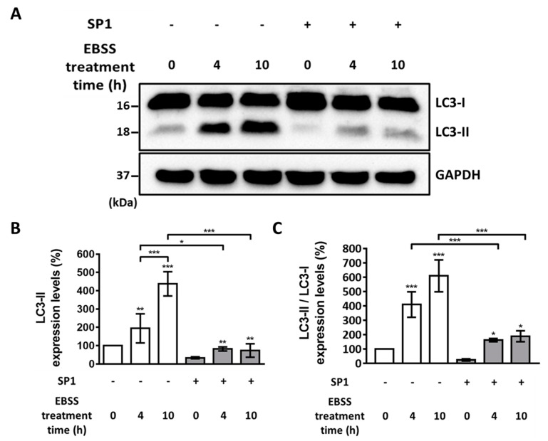Western blotting analysis of LC3-I and LC3-II levels in the CHO cells before and after the EBSS treatment. ( A ) LC3-I and LC3-II protein levels were analyzed by performing Western blotting analysis. The cells were treated with EBSS for 0, 4, and 10 h. Glyceraldehyde 3-phosphate dehydrogenase (GAPDH) was used as an internal control. ( B ) Quantitative analysis of the results of Western blotting analysis are shown in ( A ) for LC3-II levels normalized using the GAPDH levels. Statistical analysis of data obtained from three independent experiments was performed using <t>GraphPad</t> Prism 7.0 software and ImageJ 1.43. ( C ) Quantitative analysis of the results of Western blot analysis shown in (A) for LC3-II levels normalized using LC3-I levels. All values are represented as mean ± SD (* p