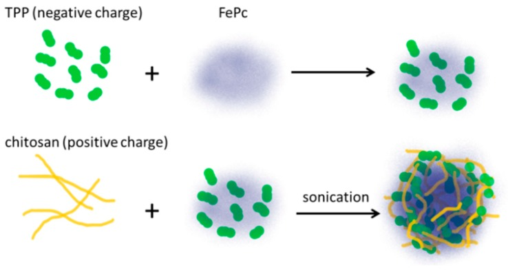 A schematic diagram for the fabrication of phthalocyanine encapsulated chitosan/TPP nanoparticles (FNP) from chitosan, tripolyphosphate (TPP), and phthalocyanine-4,4′,4″,4‴-tetrasulfonic acid (FePC).
