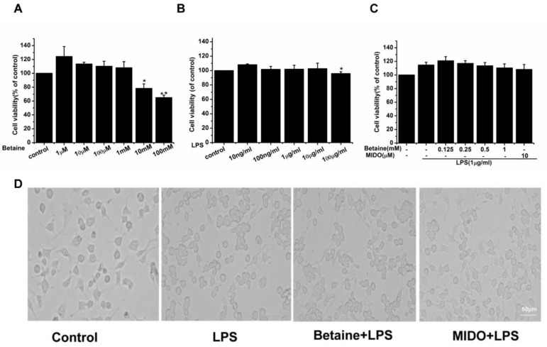 Effects of betaine on the viability and morphological changes of N9 microglial cells with or without LPS stimulation. ( A ) Effects of betaine alone on cell viability. ( B ) Effects of lipopolysaccharide (LPS) alone on cell viability. ( C ) Effects of betaine with or without LPS stimulation on cell viability. Cells were treated with betaine or MIDO (10 μM) for 1 h and then stimulated with LPS (1 μg/mL) for 24 h. ( D ) Effects of betaine with or without LPS stimulation on morphological changes. MIDO was used as a positive control. Data are presented as the means ± SEM of three independent experiments. Untreated cells served as a control group. * p