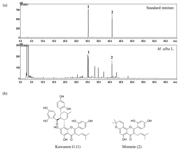 <t>HPLC</t> chromatograms of the standard mixture and M. alba L. sample at a UV detection wavelength of 266 nm ( a ) and chemical structures of the two <t>bioactive</t> marker compounds ( b ).
