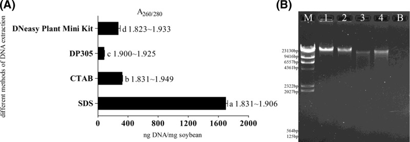 Comparison of four different DNA extraction methods A 260/280 ratios of DNA extracted with different methods; different lowercase letters indicate significant differences amongst DNA yields in ( A ); M, 1, 2, 3, 4, and B correspond to λ DNA HindIII Marker (TIANGEN, Beijing, China), SDS-based method, CTAB method, DP305 method, DNeasy Plant Mini Kit, and negative control PCR in ( B ).