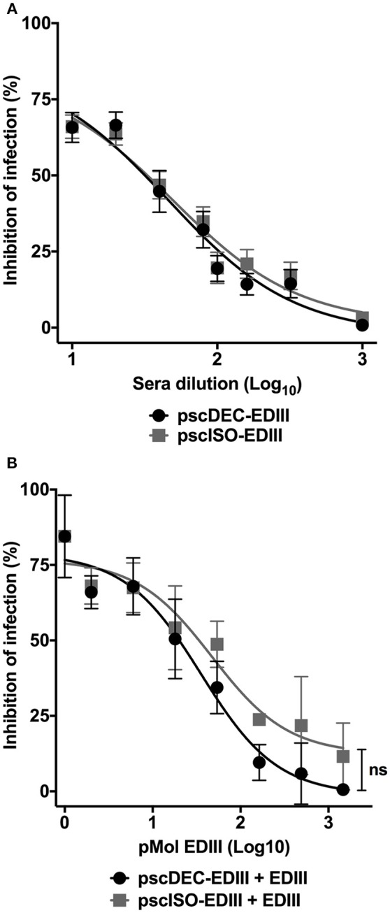 Antibodies from mice immunized with pscDEC-EDIII and pscISO-EDIII partially inhibit DENV infection by binding to EDIII. (A) Neutralization in VERO cells. Pooled sera from mice immunized as described in Figure 2 were heat inactivated at 56°C for 30 min. Two-fold serially diluted sera were incubated with the DENV2 particles for 30 min at 37°C and 5% CO 2 . The sera/virus mixture was then incubated with the cells for 1 h at 37°C and 5% CO 2 . The cultures supernatant was replaced by DMEM 5% FBS followed by another incubation at the same conditions for 24 h. Cells were stained with the 4G2 (mouse anti-flavivirus envelope antibody) and anti-mouse IgG-Alexa488. The neutralization of infection was determined in comparison to a control infection. Results are represented by means and SEM from pooled data of four independent experiments. (B) Competition assay with the recombinant EDIII protein. A fixed dilution (1:20) of sera was incubated with increasing molar concentrations of EDIII protein prior to incubation with the virus. The cells were resuspended in FACS buffer and 20,000 events were acquired in the BD FACSCalibur™ (BD biosciences) flow cytometer. The neutralization of infection was determined in comparison to a control infection with sera derived from mice injected with saline. Data were analyzed by a two-way ANOVA for repetitive measures followed by Sidak's multiple comparisons test. ns = not-significant. Representative of three independent experiments.
