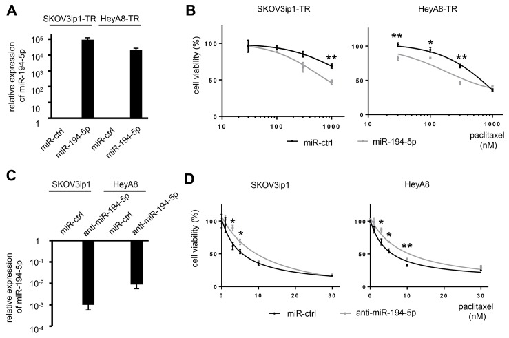 miR-194-5p modulates sensitivity to paclitaxel in ovarian cancer cell lines ( A ) <t>miRNA</t> <t>qRT-PCR.</t> Cells were transfected with pre-miR-194-5p (miR-194-5p) or control miR (miR-ctrl). Twenty-four hours later, expression of miR-194-5p relative to RNU6B expression was calculated using the 2 -ΔΔCT method. Relative fold differences are presented. ( B ) MTS assay. Twenty-four hours after transfection with miR-194-5p or control miR-ctrl, cells were treated with paclitaxel for 72 hours and cell viability was assessed. Cell viability is shown relative to that in paclitaxel-free conditions. ( C ) miRNA qRT-PCR. Cells were transfected with anti-miR-194-5p or miR-ctrl for 24 hours. ( D ) MTS assay. As described in B, cells were transfected with anti-miR-194 or miR-ctrl and cell viability was assessed. Experiments were performed in triplicate. Data are represented as mean ± SE and are obtained from three independent experiments. * P