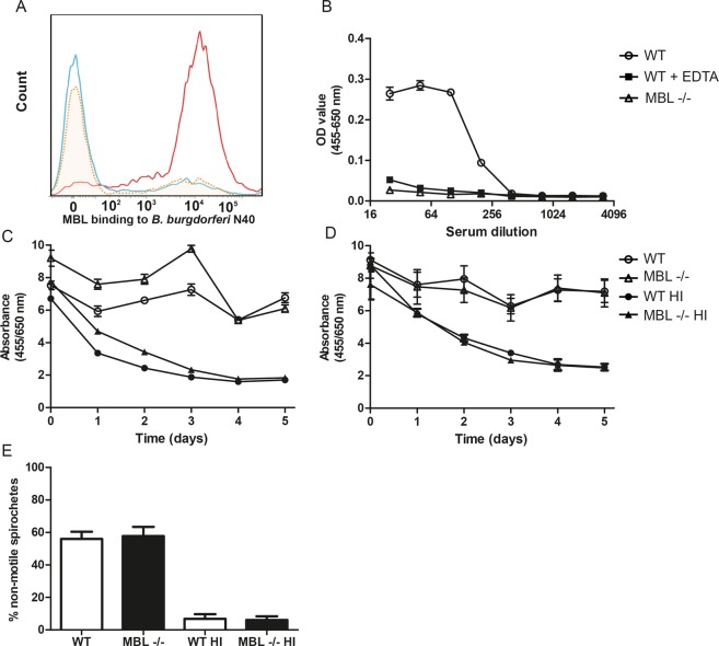 <t>MBL</t> binds to B. burgdorferi , but MBL deficiency in mice does not decrease complement-dependent killing of B. burgdorferi . ( A ) Recombinant human MBL (5 µg/mL) was added to cultured CFSE-labeled B. burgdorferi N40 spirochetes (2 × 10 8 spirochetes/mL) and after two washing steps, binding of MBL to B. burgdorferi was subjected to FACS analysis (red line). As a control, 100 mM EDTA was added together with MBL which abrogates calcium dependent binding of MBL CRD's (yellow dotted line). The blue line represents spirochetes without MBL. Binding of MBL was determined using a mouse anti-human MBL antibody and a goat anti-mouse <t>IgG</t> Texas Red antibody. ( B ) ELISA assessment of dose-dependent binding of MBL in murine serum to B. burgdorferi membrane protein extract-coated plates. WT serum or MBL deficient murine serum was added to wells and murine MBL was detected using an antibody against murine MBL-A. As a control, normal murine serum was pre-incubated with 100 mM EDTA. ( C ) Growth inhibition of B. burgdorferi strain N40 by murine serum was measured by the color change of Phenol Red at 562/630 nm once a day for up to five days. Ratio NMS/HI NMS and MBL deficient serum/HI MBL deficient serum after five days was 3.66 and 3.01, respectively. ( D ) Growth inhibition of B. garinii strain A87S by murine serum. The ratio NMS/HI NMS and MBL deficient serum/HI MBL deficient serum after five days was 2.84 and 2.86, respectively. ( E ) B. garinii strain A87S was incubated with 25% WT NMS, 25% MBL deficient murine serum or 25% heat-inactivated (HI) NMS (control). After 1 h of incubation the percentages of non-motile spirochetes were determined by a researcher blinded to the experimental design. Each sample and each time point were performed in triplicates and symbols or bars represent the mean ± SEM.