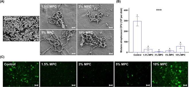 Qualitative scanning electron images of S. mutans cells attached to the surfaces of control and experimental groups at a magnification of 5,000× ( A ). Scale bar is 2 µm. Colony-forming unit (CFU) counts derived from S. mutans cells attached on the surfaces of control and MPC-LCFV ( B ). Different letters above bars indicate significant differences. *** P
