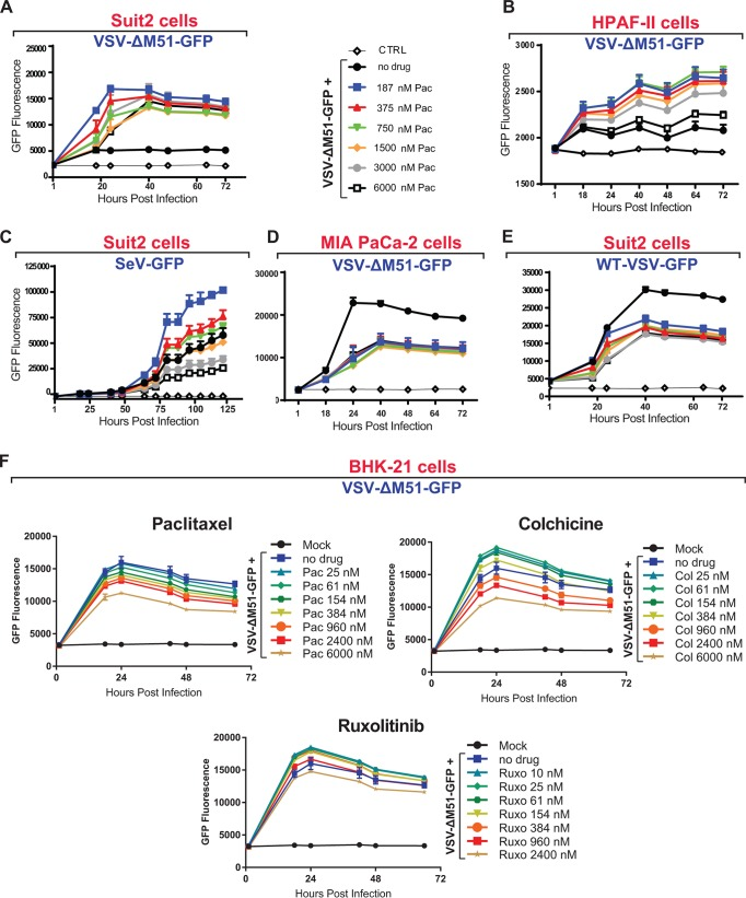 G 2 /M arrest improves viral replication only when active type I IFN signaling inhibits viral replication. (A to E) Suit2 cells (A, C, and E), HPAF-II cells (B), or MIA PaCa-2 cells (D) were treated with medium or different concentrations of paclitaxel (Pac) at the indicated concentration ranges for 24 h and then infected (or mock infected) with VSV-ΔM51 (MOI of 0.1 for Suit2 or MOI of 10 for HPAF-II cells), WT VSV (MOI of 0.1), or Sendai virus recombinant SeV-GFP (MOI of 0.1). The MOI for each virus was calculated based on virus titration on BHK-21 cells. The level of GFP intensity was measured in cells over time. (F) BHK-21 cells were treated 26 h prior to or following VSV-ΔM51 infection at an MOI of 0.01 with medium, paclitaxel, colchicine (Col), or ruxolitinib (Ruxo) at the indicated concentration ranges. After infection, virus replication was measured at regular intervals by way of GFP fluorescence. The means and SD of the means are indicated.