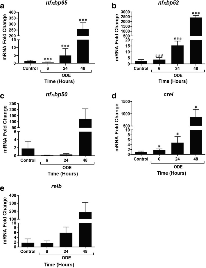 ODE exposure modulates NF-κB subunit gene expression with time. qRT-PCR analysis on NF-κB sub unit genes was performed on control and ODE exposed cells at 6, 24 and 48 h (a-3). Compared controls, ODE-exposure induced a significant increase in nfkbp65 ( a ), nfkbp52 ( b ) and crel ( d ) at 6, 24 and 48 h (#, p