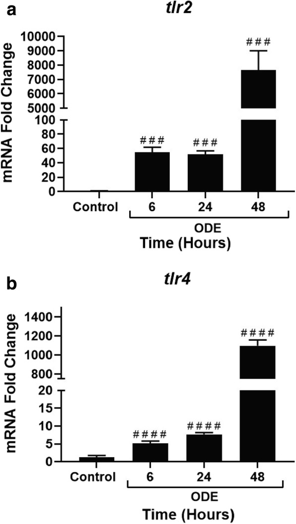 ODE exposure increases tlr2 and tlr4 gene expression with time. qRT-PCR analysis on tlr2 ( a ) and tlr4 ( b ) genes was performed on control and ODE exposed cells at 6, 24 and 48 h. Compared to controls, ODE exposure resulted in a significant increase in fold in the expression of both tlr2 and tlr4 (###, p