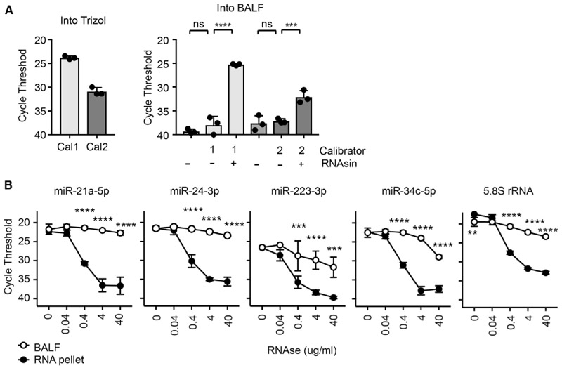 "Ex-miRNA Are Stable and Protected from RNases in BALF (A) qPCR of synthetic miRNAs (""calibrators"" Cal1 and Cal2) spiked into Trizol or BALF with or without an RNase inhibitor (RNAsin) (n = 3 from 1–2 independent experiments, 1-way ANOVA with Bonferroni's multiple comparison test). (B) qPCR of analysis of miRNAs from BALF and RNA pellets treated with RNaseA (n = 3 from 3 independent experiments, 2-way ANOVA with Bonferroni's multiple comparison test). Error bars are mean + SD; *p"