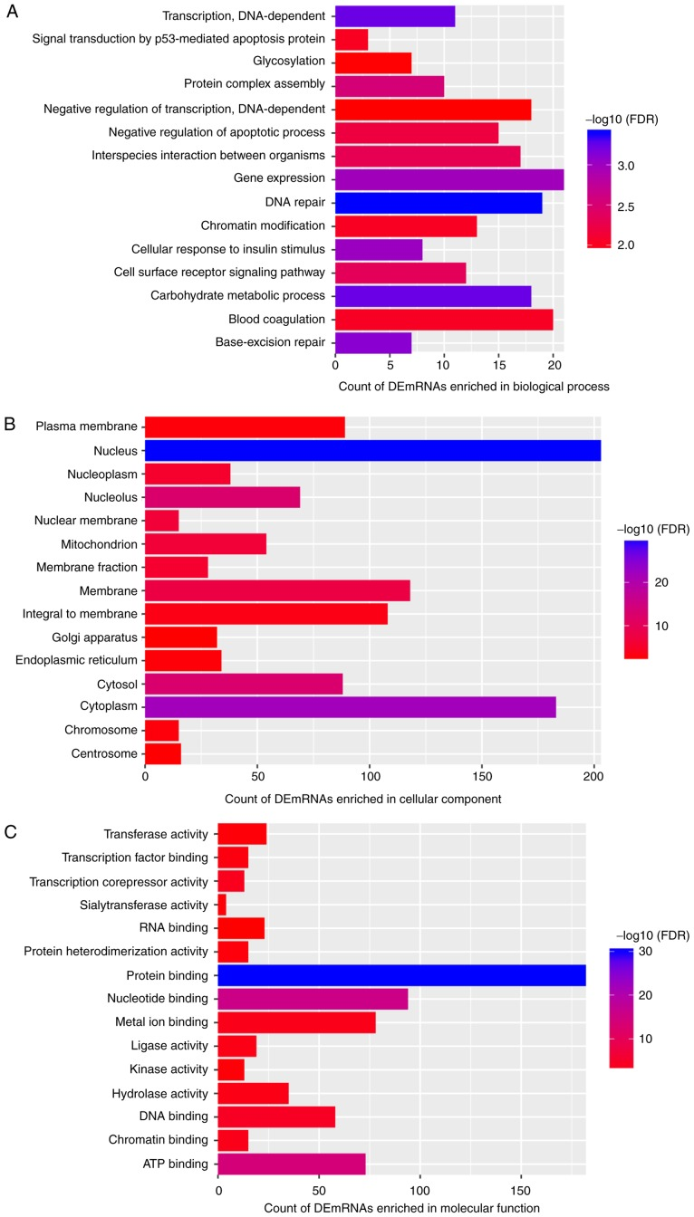 Top 15 most significantly enriched GO terms of DEmRNAs co-expressed with DElncRNAs. The x-axis presents the number of DEmRNAs enriched in the GO terms and the y-axis presents the GO terms. (A) Biological process; (B) Cellular component; (C) Molecular function. GO, Gene Ontology; DEmRNA, differentially expressed mRNA; DElncRNA, differentially expressed long non-coding RNA; FDR, false discovery rate.