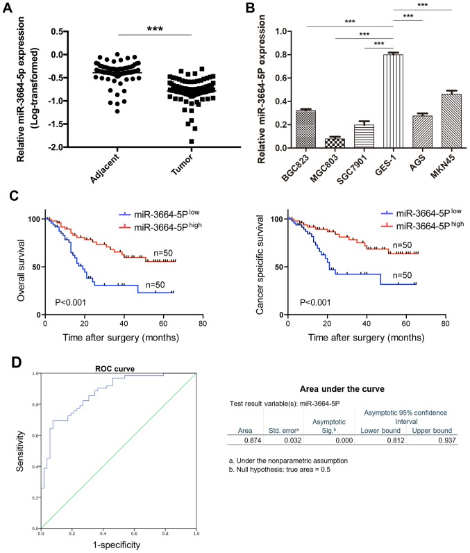miR-3664-5P is significantly downregulated in GC and associated with favorable prognosis in patients with GC. (A) miR-3664-5P expression in 100 human GC and paired adjacent normal tissues was detected via RT-qPCR. (B) miR-3664-5P expression was downregulated in GC cell lines when compared with the human normal gastric cell line GES-1; miR-3664-5P expression was determined by RT-qPCR with GAPDH as control. (C) Kaplan-Meier analysis indicated that patients with high miR-3664-5P expression (n=50) had a better overall survival and cancer specific survival when compared with the low expression group (n=50). (D) miR-3664-5P expression was detected in preoperatively obtained plasma from patients with GC (n=60) and compared with tumor-free patients (n=40). ROC curve analysis of miR-3664-5P was utilized to detect the diagnostic efficiency of GC. Data are presented as mean ± standard error of the mean. *** P