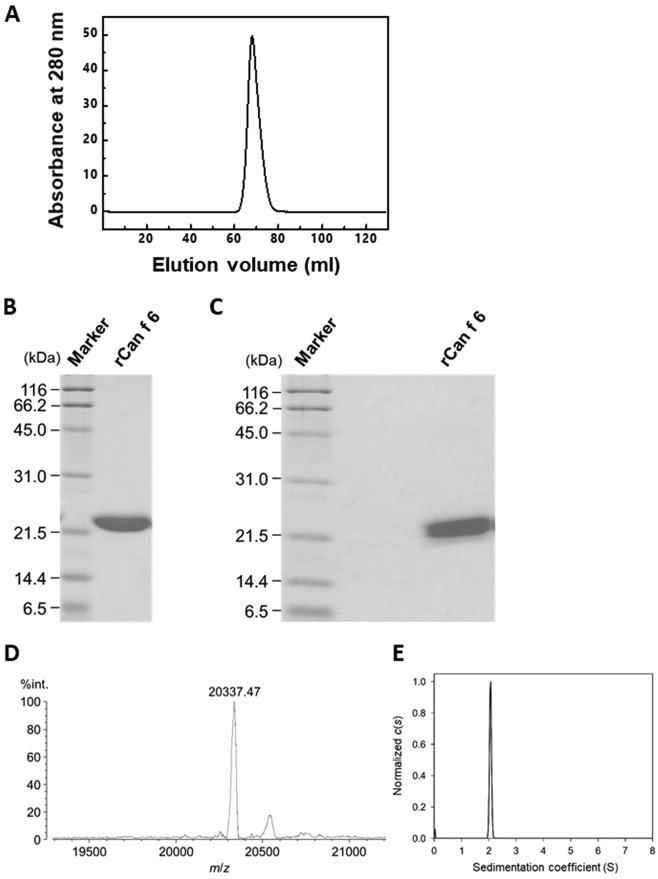Purification of rCan f 6. ( A ) Gel filtration chromatogram of the purified rCan f 6. ( B , C ) SDS-PAGE profiles of rCan f 6. Purified recombinant protein (3µg/lane) was electrophoretically separated under ( B ) reducing or ( C ) non-reducing conditions and then stained with Coomassie Brilliant blue. ( D ) Matrix assisted laser desorption/ionization-time of flight (MALDI-TOF) mass spectra of rCan f 6. Mass spectrometry of the purified recombinant protein was carried out in the linear mode using sinapinic acid as a matrix. The  m/z  value of the main peak (20337.47) corresponds to the deduced molecular mass of the recombinant protein. The sub-peak ( m/z  20550) is considered to be derived from rCan f 6 complexed with sinapinic acid. ( E ) Distribution states of rCan f 6 analysed by AUC-SV. The molecular mass of rCan f 6 was calculated as 19.9kDa.