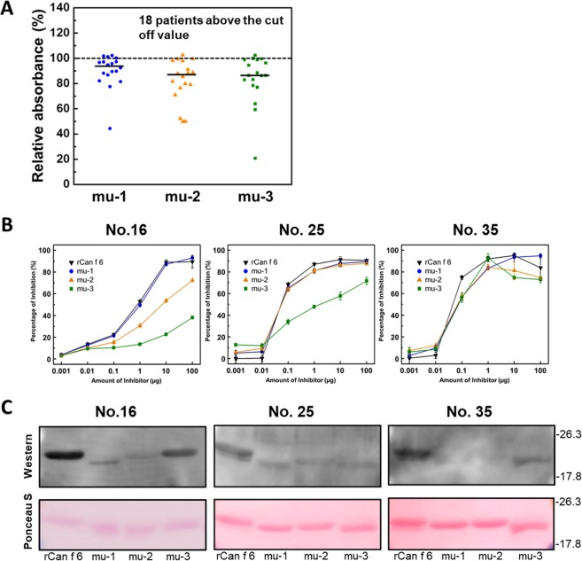 Effect of predicted Can f 6 epitope mutations on IgE reactivity. ( A ) Relative IgE reactivity to the mutated rCan f 6 proteins compared with rCan f 6 was evaluated by ELISA. Can f 6-reactive sera from 18 patients were subjected to this assay. Lines in individual columns denote the median. ( B ) Inhibition ELISA to assess specific IgE binding to immobilized rCan f 6 in the presense of wild-type and mutated rCan f 6 proteins as competitors. Sera from patients 16, 25 and 35 were used for this assay. ( C ) IgE-western blotting of Can f 6. rCan f 6 and mutated rCan f 6 proteins were subjected to SDS-PAGE and then transferred to PVDF membranes. The blots were treated with the serum from the 3 patients (upper panels). The blots were also stained with Ponceau S to verify proper protein transfer (lower panels).