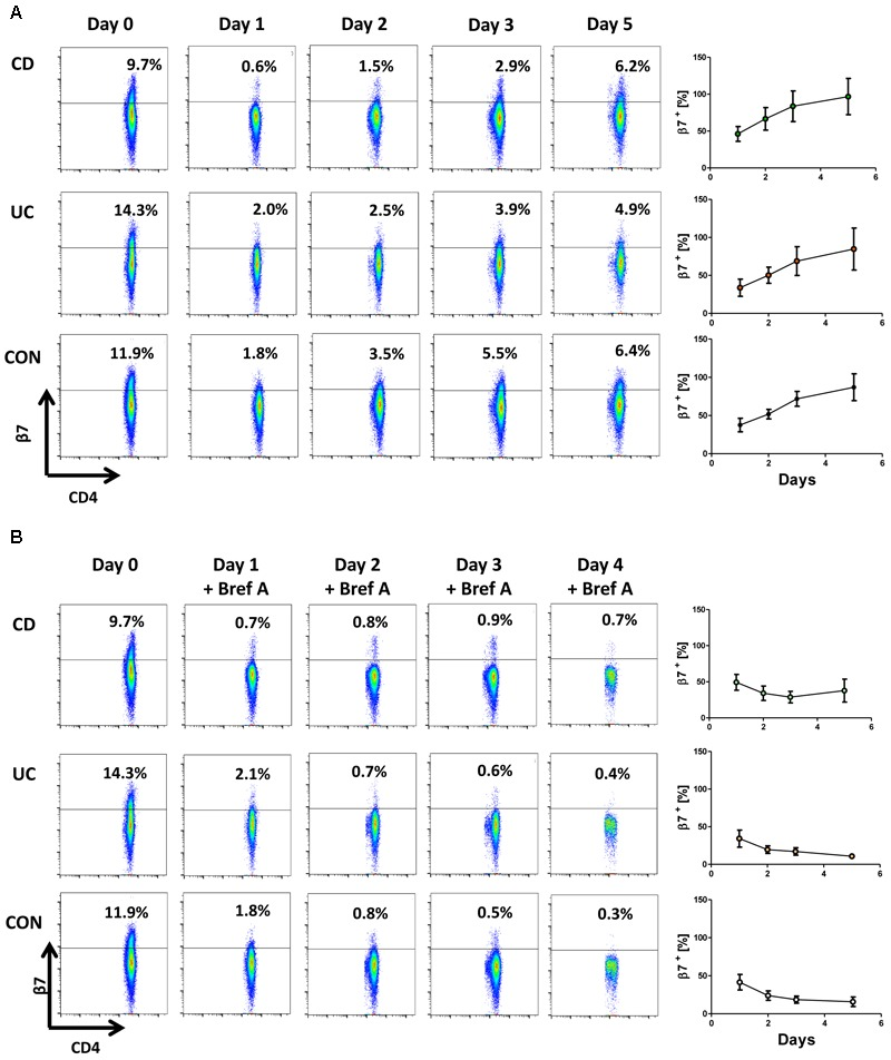 Cell surface expression of β7 integrin is restored after removal of etrolizumab-s. (A) Left panels: Representative flow cytometry showing β7 integrin expression at baseline (day 0) and 24 (day 1), 48 (day 2), 72 (day 3) and 120 h (day 5) after treatment with etrolizumab-s for the first 24 h of the experiment. Right panels: Quantitative flow cytometry of β7 surface expression over time relative to day 0 ( n = 5–6 per group). (B) Left panels: Representative flow cytometry showing β7 integrin expression at baseline (day 0), and 24 (day 1), 48 (day 2), 72 (day 3) and 120 h (day 5) after treatment with etrolizumab-s for the first 24 h of the experiment and treatment with Brefeldin A from day 1 to day 5. Right panels: Quantitative flow cytometry of β7 surface expression over time relative to day 0 ( n = 5–6 per group).